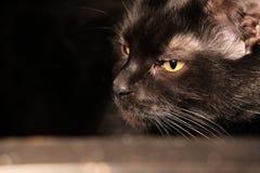 Schwarze traurige Katze, die auf einem Glastisch liegt Wirkliches Hauptfoto stockbild
