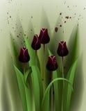 Schwarze Tulpen Lizenzfreie Stockfotografie