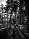 Schwarze u. weiße Broompark-Bäume Stockfotografie