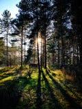 Schwarze u. weiße Broompark-Bäume Lizenzfreie Stockfotos