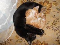 Schwarze und rote Katzen Lizenzfreies Stockfoto
