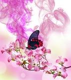 Schwarze und rote tropische Schmetterlinge, die auf einer Orchidee sitzen Lizenzfreie Stockfotografie