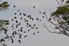 Schwarze Vögel, die über das Land fliegen Lizenzfreie Stockbilder