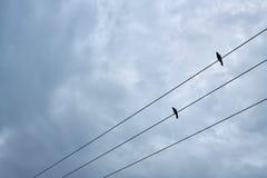 Schwarze Vögel, die auf elektrischer Leitung sitzen Lizenzfreies Stockfoto