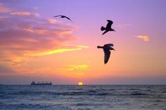 Schwarze Vögel und bunte Sonnenaufgangskyline Stockfotos
