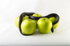 Schwarze Versuchungsschlange und -äpfel lizenzfreies stockfoto
