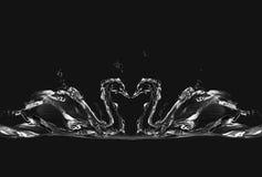 Schwarze Wasser-Schwäne in der Liebe Stockfoto