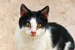 Schwarze weiße Katze Stockfotos