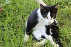 Schwarze weiße Katze im Garten Stockfoto