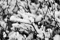 Schwarze Winterbaumaste umfasst mit weißem Schnee Lizenzfreie Stockfotos