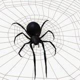 Schwarze Witwen-Spinne Lizenzfreies Stockbild