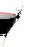Schwarze Witwen-Spinne auf Wein-Glas Stockfoto