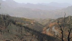 Schwarze zitronengelbe Kiefern arfter Feuersbrunst in den Bergen von Canaries stock video footage