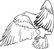 Schwarzer Adler stockfotografie