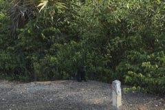 Schwarzer Affe auf Kiesweise Stockfotos