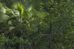 Schwarzer Affe auf Kiesweise Lizenzfreie Stockbilder
