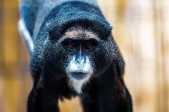 Schwarzer Affe im Zoo Lizenzfreies Stockfoto