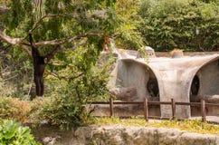 Schwarzer Affe am Zoo Stockfotografie