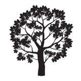 Schwarzer Ahornbaum Auch im corel abgehobenen Betrag Stockbilder