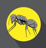Schwarzer Ant Vector Lizenzfreie Stockfotos
