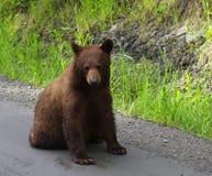 Schwarzer Bär stockbild