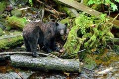 Schwarzer Bär im Wald Lizenzfreie Stockfotografie