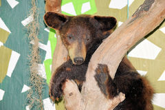 Schwarzer Bär am Museum Lizenzfreie Stockfotografie