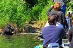 Schwarzer Bär und Leute Alaskas, die vom Boot überwachen Lizenzfreies Stockfoto