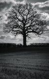 Schwarzer Baum lizenzfreies stockbild