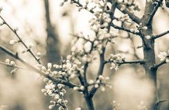 Schwarzer Baum Lizenzfreies Stockfoto