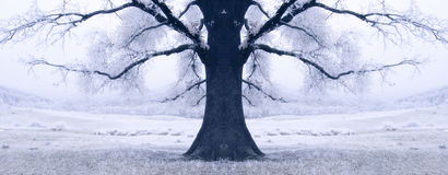Schwarzer Baum umgeben durch Schnee im Winter Lizenzfreies Stockfoto
