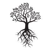 Schwarzer Baum und Wurzeln Stockfotos
