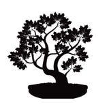 Schwarzer Bonsai-Ahornbaum Abbildung Lizenzfreie Stockfotos