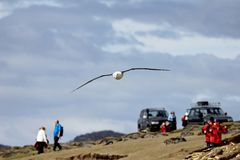 Schwarzer Browed Albatros, der über Leute, thalassarche melanophris, Falkland Islands fliegt Lizenzfreie Stockfotos