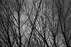 Schwarzer Busch verzweigt sich unter den grauen bewölkten Himmel lizenzfreie stockfotos