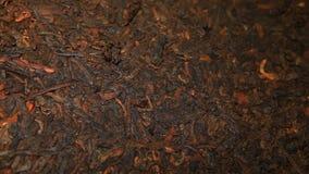Schwarzer chinesischer Tee niemand stock footage