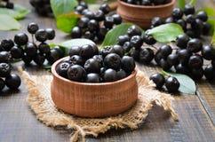 Schwarzer Chokeberry in der hölzernen Schüssel Stockfoto