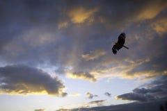 Schwarzer Drachen und bewölkter Sonnenuntergang Lizenzfreies Stockfoto