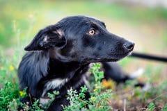 Schwarzer erwachsener Hund lizenzfreie stockfotografie