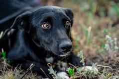 Schwarzer erwachsener Hund stockfotografie