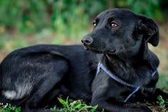 Schwarzer erwachsener Hund lizenzfreie stockfotos