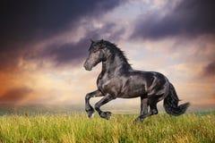 Schwarzer friesischer Pferdegalopp Lizenzfreie Stockfotografie