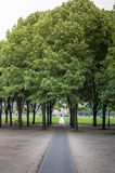 Schwarzer Gehweg durch Grop von Bäumen Stockbilder