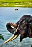 Schwarzer großer männlicher Elefant Lizenzfreie Stockfotografie