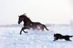 Schwarzer Hengst und ein Hund Lizenzfreie Stockfotografie