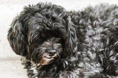 Schwarzer Hund Stockbild