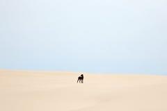 Schwarzer Hund Lizenzfreie Stockfotografie