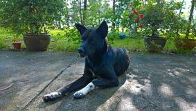 Schwarzer Hund Lizenzfreies Stockbild