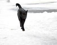 Schwarzer Hund stockbilder