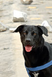 Schwarzer Hund Lizenzfreie Stockfotos